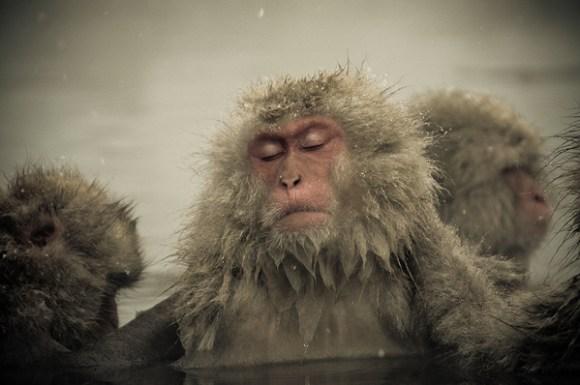 Fotos de macaco