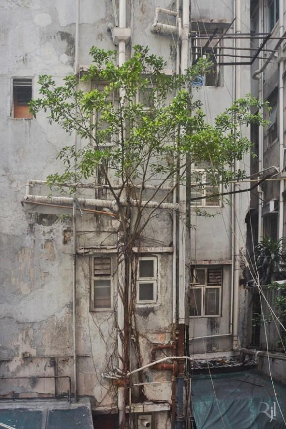 Árvores no concreto (10)