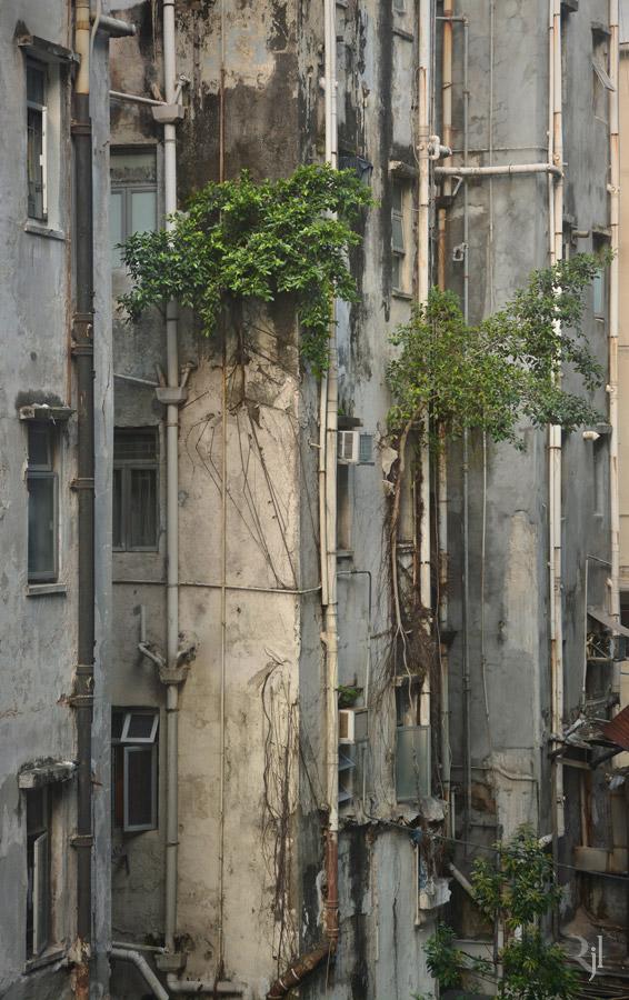 Árvores no concreto (12)