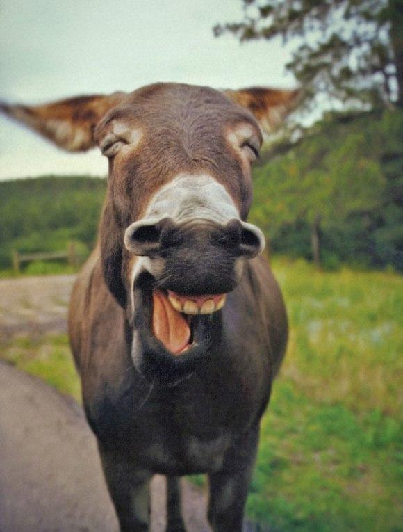 cute-smiling-animals-32