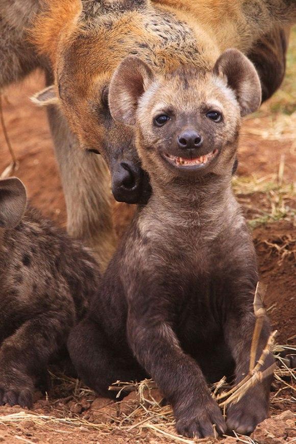 cute-smiling-animals-9