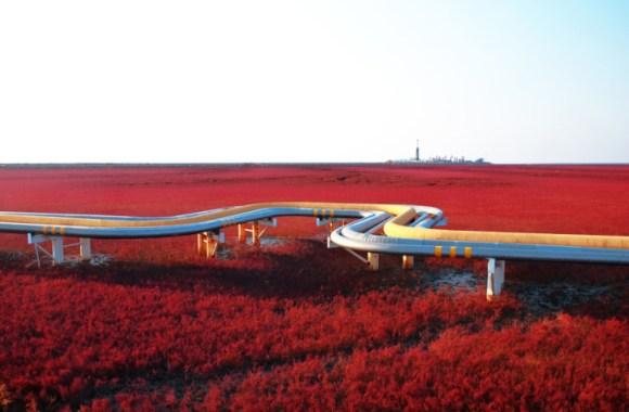 Red-beach-Panjin-China-690x452[1]