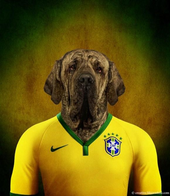 caes-selecao-brasil