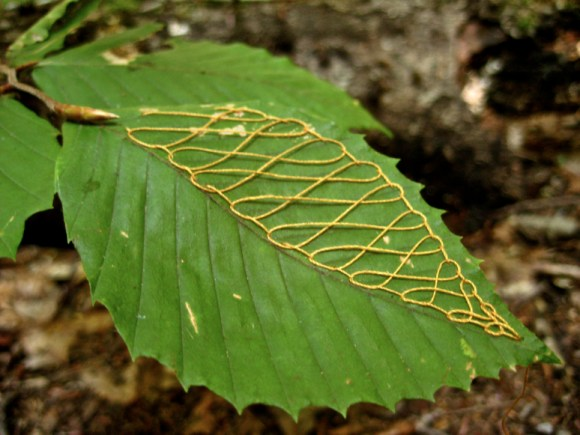 folhas mandalas costuradas (13)
