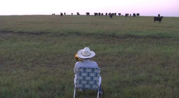 vacas ouvem lorde