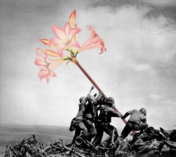 flores na guerra (5)