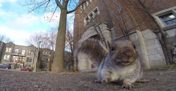 O que acontece quando um esquilo encontra uma GoPro na calçada?