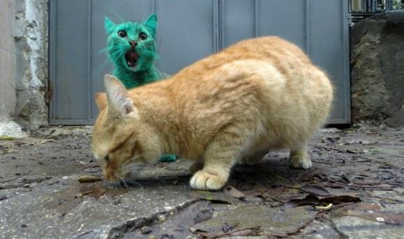 Gato Verde da Bulgária 6