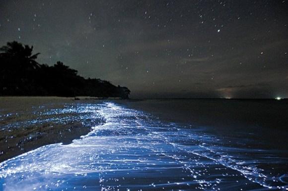 Praias luminescentes 1