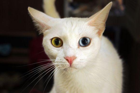 Santuário dos gatos 13