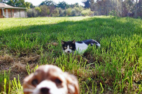 Santuário dos gatos 6