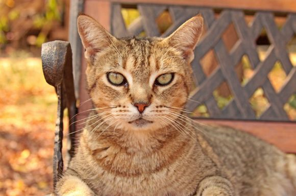 Santuário dos gatos 8