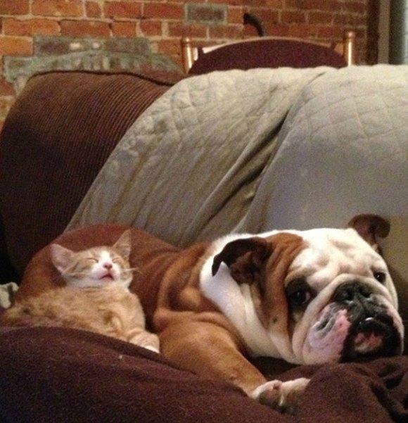 Gatos e cães 12
