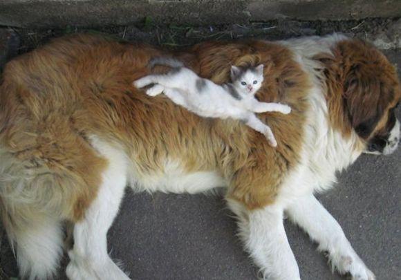 Gatos e cães 2