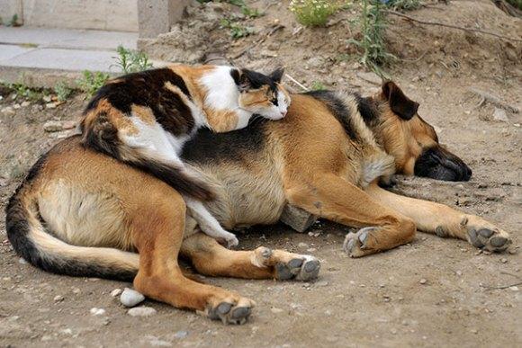 Gatos e cães 20