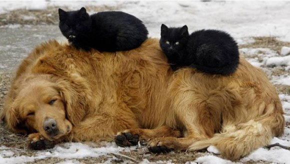 Gatos e cães 6