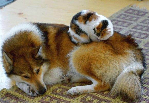 Gatos e cães 8