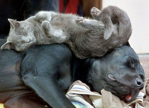 Gatos e cães 9