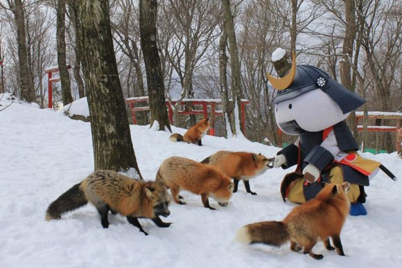 zao-fox-village-japan-32[1]