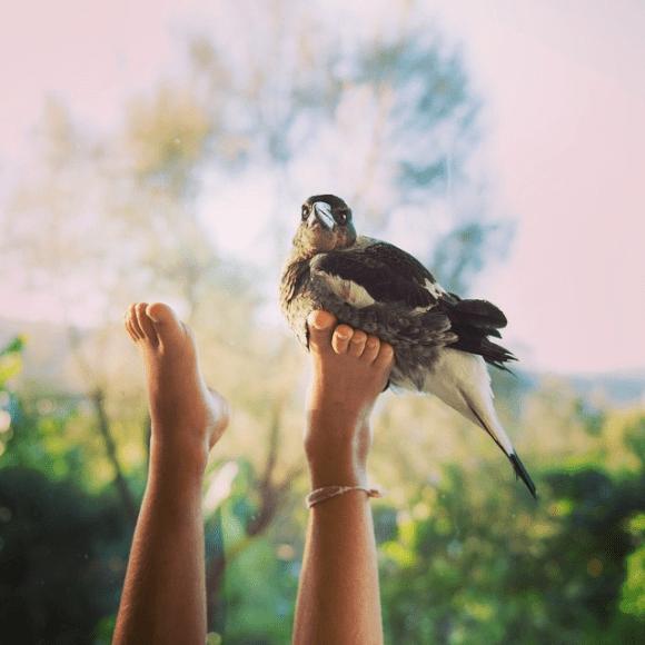 Amizade entre menino e pássaro 08