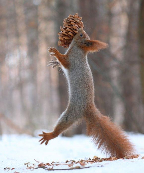 Esquilos fofos - fotografia 2