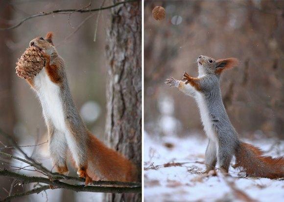 Esquilos fofos - fotografia 3