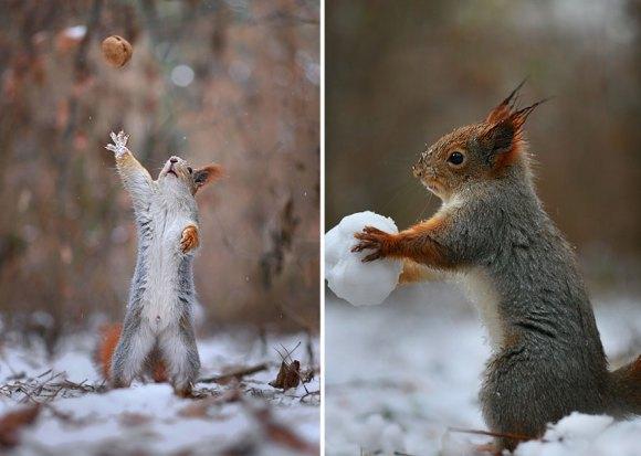 Esquilos fofos - fotografia 4