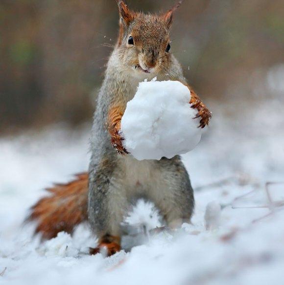 Esquilos fofos - fotografia 6