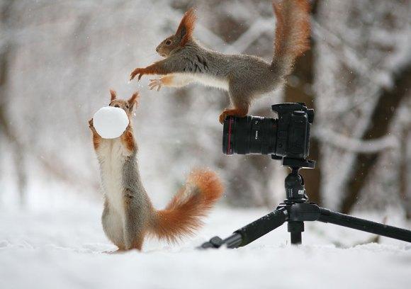 Esquilos fofos - fotografia 8