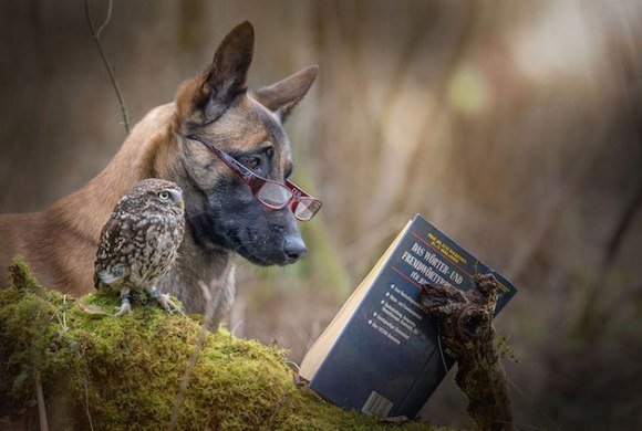 cachorro-e-coruja-12