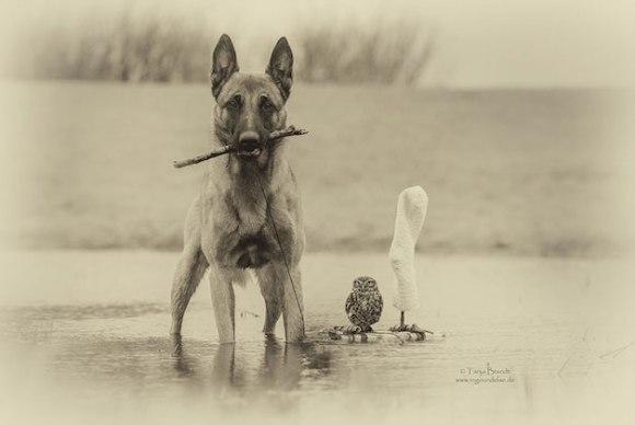 cachorro-e-coruja-13