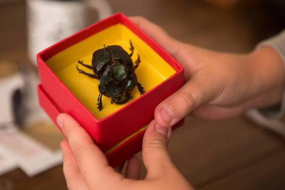 Escaravelho do diabo - Filme 1