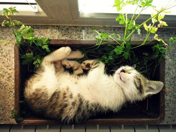 Gatos em vasos 10