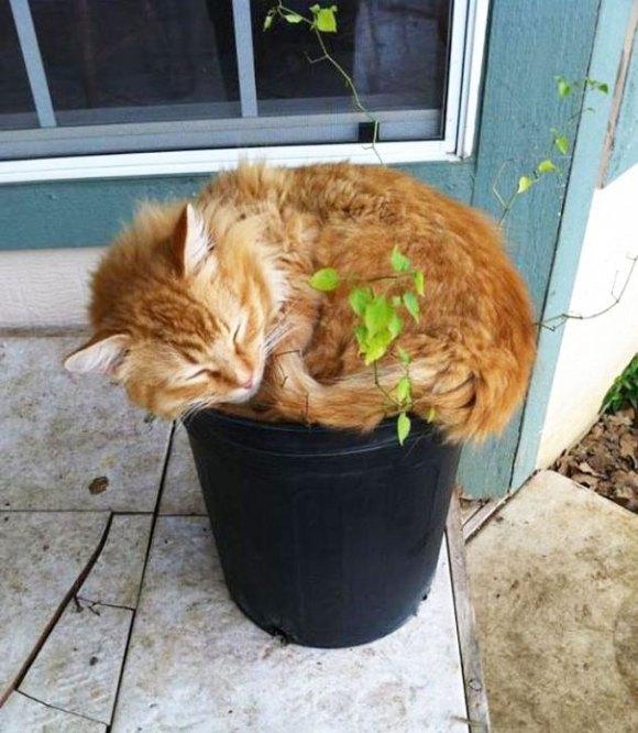 Gatos em vasos 15