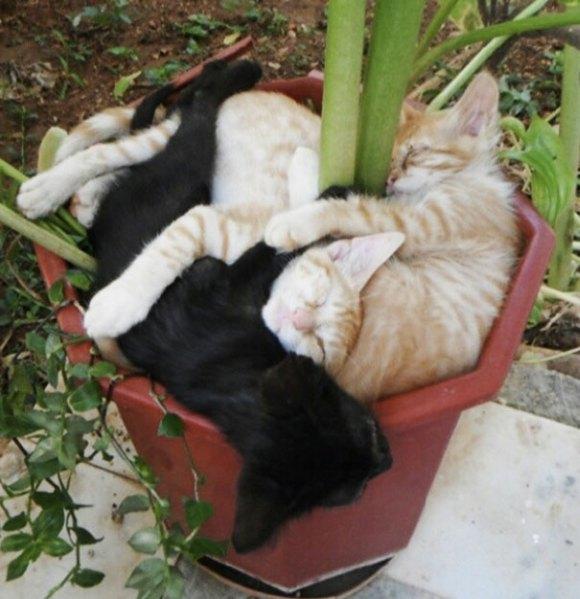 Gatos em vasos 7