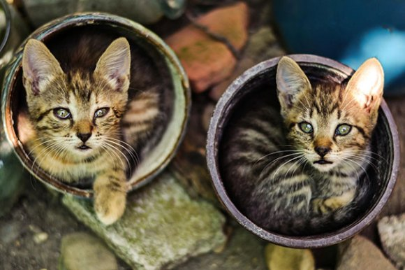 Gatos em vasos 8