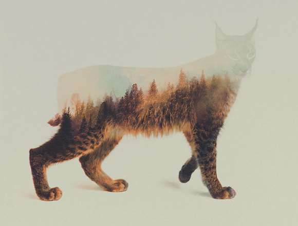 Fotos de dupla exposição - animais e floresta 13