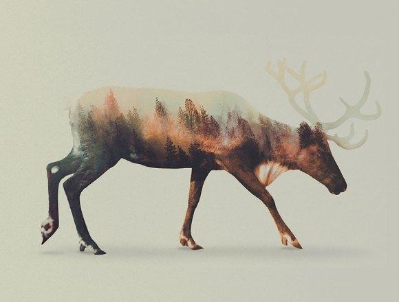 Fotos de dupla exposição - animais e floresta 3