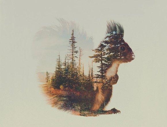 Fotos de dupla exposição - animais e floresta 7