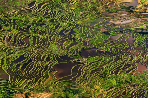 Campos de arroz chineses 2
