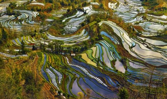 Campos de arroz chineses 8
