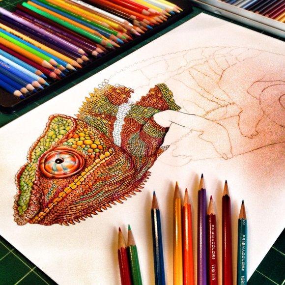 Desenho de lagarto 8