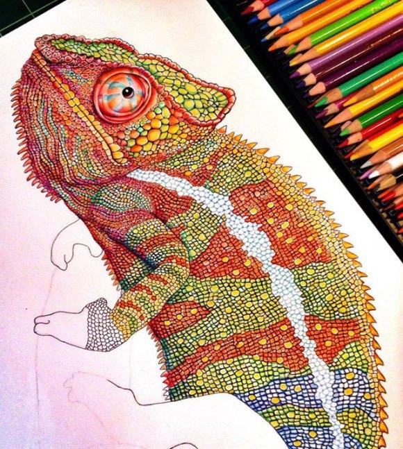 Desenho de lagarto 9