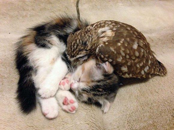 coruja e gato 1