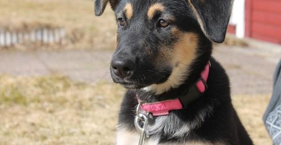 Você sabia que pode ajudar um cão de abrigo apenas passeando com ele?