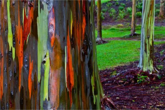 eucalyptus-stand-c2a9-2011-christopher-martin-2348