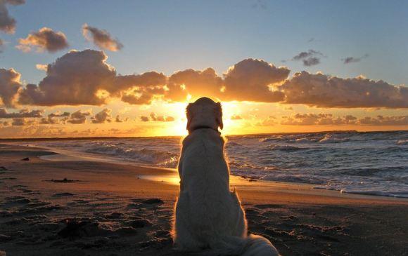 Fotos de cachorros 12