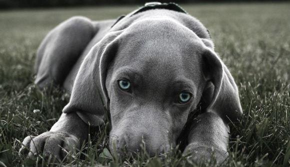 Fotos de cachorros 3
