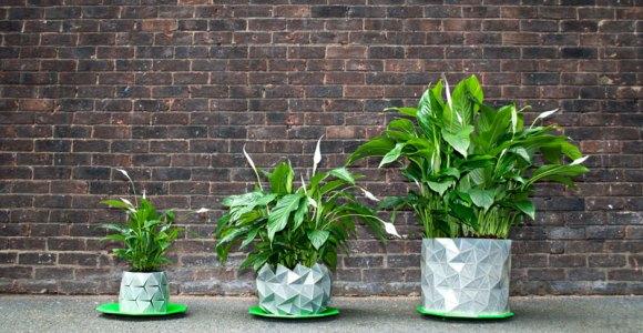 Esse vaso genial aumenta de tamanho junto com a planta