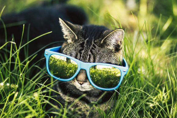 Fotografias de gatos 10